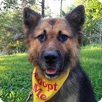 Adopt A Pet :: Leon - Louisville, KY