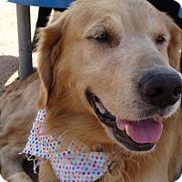 Adopt A Pet :: Twix - Apple Valley, CA