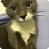 Adopt A Pet :: Ocho - Hayward, CA