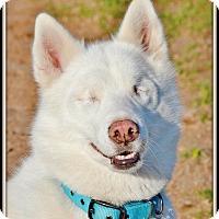 Adopt A Pet :: River - Sugar Land, TX