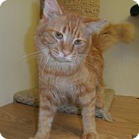 Adopt A Pet :: Condor - Milwaukee, WI