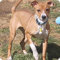 Adopt A Pet :: Sadie - North Olmsted, OH