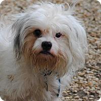 Adopt A Pet :: Ray - Philadelphia, PA
