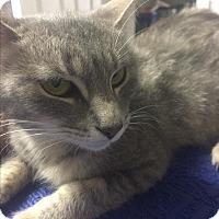 Adopt A Pet :: Daisy - St. Louis, MO