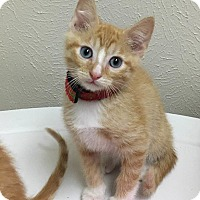 Adopt A Pet :: Larkspur - Westminster, CO