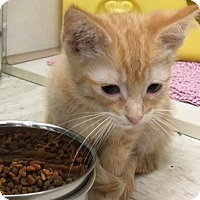 Adopt A Pet :: Kipper - Warren, OH