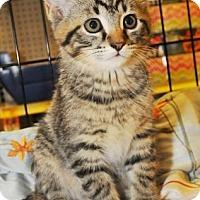 Adopt A Pet :: Scott - Garland, TX