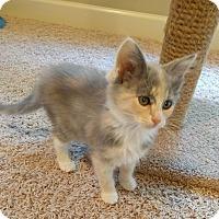 Adopt A Pet :: Elena - Huntsville, AL
