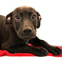 Adopt A Pet :: Avery - Glastonbury, CT