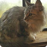 Adopt A Pet :: Wraith - Ennis, TX