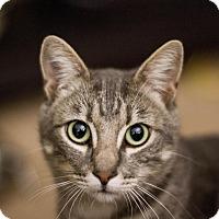 Adopt A Pet :: Dorset - Los Angeles, CA