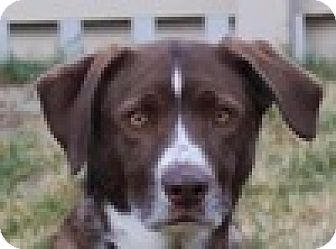 Border Collie Mix Dog for adoption in Portola, California - Bo