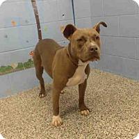 Adopt A Pet :: A499323 - San Bernardino, CA