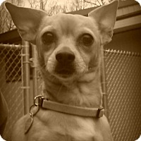 Adopt A Pet :: Sasha - Muskegon, MI