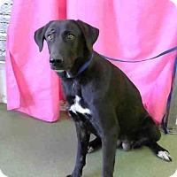 Adopt A Pet :: URGENT 12/9 @ DEVORE - San Bernardino, CA