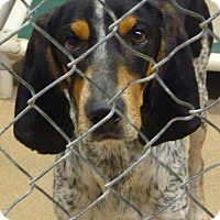 Adopt A Pet :: 48251 Cell Dog Ranchero - Zanesville, OH