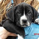 Adopt A Pet :: Tallula (11 lb) Video!