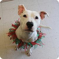 Adopt A Pet :: Marley - Trenton, NJ