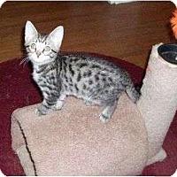 Adopt A Pet :: Calvin--adopted!! - New Richmond, OH