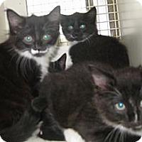Adopt A Pet :: Penguin - Dallas, TX