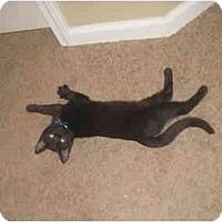 Adopt A Pet :: Lupin - Davis, CA