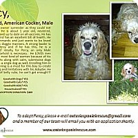 Adopt A Pet :: Percy - Ottawa, ON