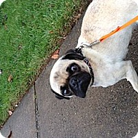Adopt A Pet :: camille - Fairfax, VA