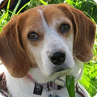 Adopt A Pet :: Becki-WISCONSIN - Wood Dale, IL
