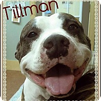 Adopt A Pet :: Tillman - Houston, TX