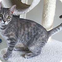 Adopt A Pet :: Dixie - Fairfax, VA