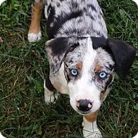 Adopt A Pet :: Nala - Flemington, NJ