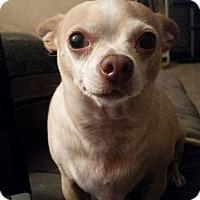 Adopt A Pet :: Taquito - Las Vegas, NV