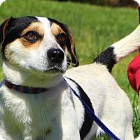 Adopt A Pet :: Buster - Glastonbury, CT