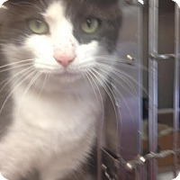 Adopt A Pet :: Griffin - East Brunswick, NJ