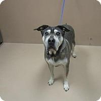 Adopt A Pet :: KODA - Reno, NV