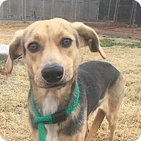 Adopt A Pet :: PREMA - Chandler, AZ