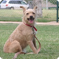 Adopt A Pet :: Hobo - Enid, OK