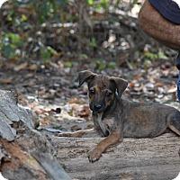 Adopt A Pet :: Rena - Groton, MA