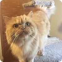 Adopt A Pet :: Kayla - Columbus, OH