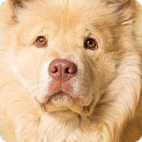 Adopt A Pet :: Romeo - Gilbert, AZ