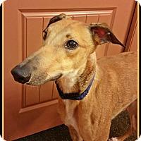 Adopt A Pet :: Charlie - Geneva, OH