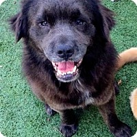 Adopt A Pet :: LEFT TO DIE!! - Ft Myers Beach, FL