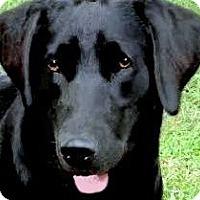 Adopt A Pet :: HEIDI(OUR