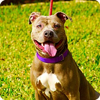 Adopt A Pet :: Hazel - Baltimore, MD