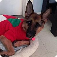German Shepherd Dog Dog for adoption in Matawan, New Jersey - Tilly