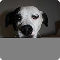 Adopt A Pet :: Petey - Stilwell, OK