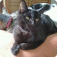 Adopt A Pet :: Dove - Grand Rapids, MI