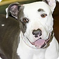Adopt A Pet :: Jersey - Scottsdale, AZ
