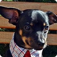 Adopt A Pet :: Pablo - Bridgeton, MO