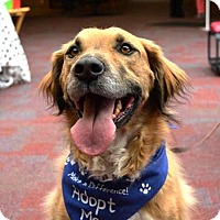 Adopt A Pet :: Doc - Piqua, OH